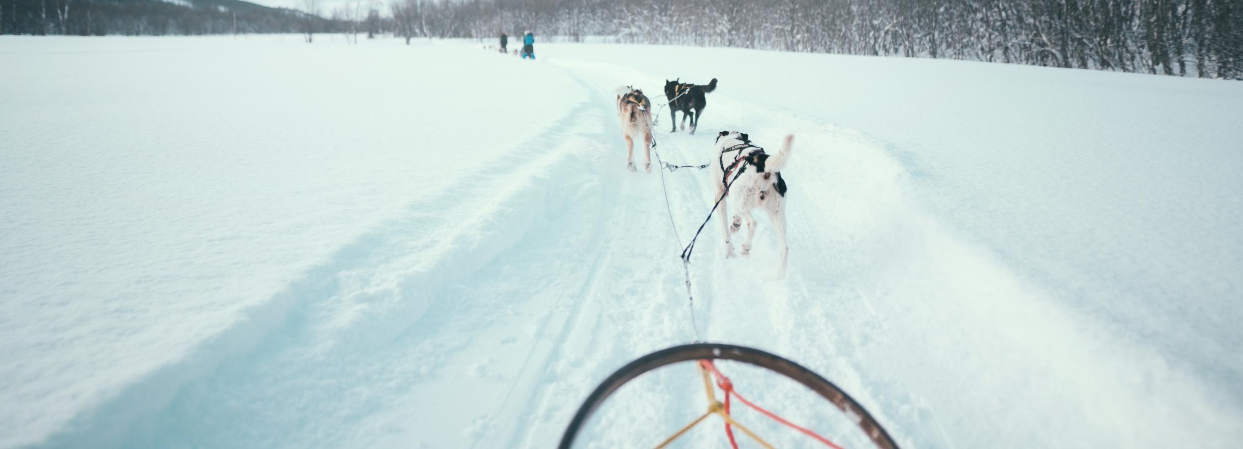 Tromsø: slee met husky's, Ice Domes en rendieren voederen