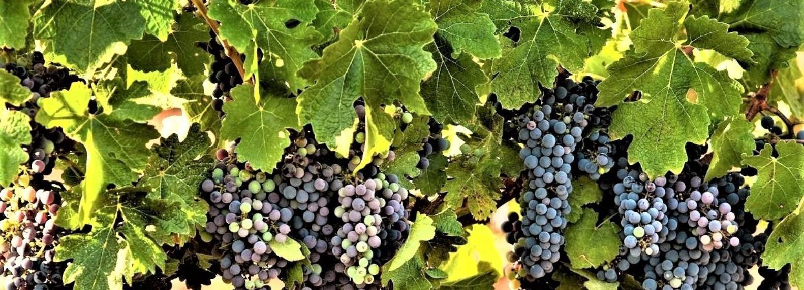 Tour del vino a nord di Israele da Tel Aviv