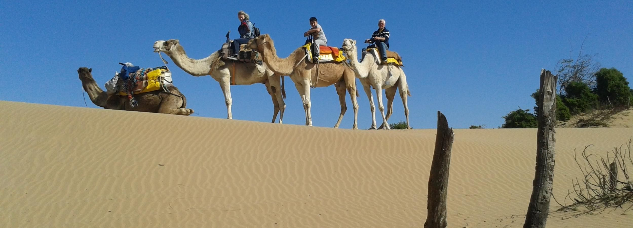 From Essaouira: Dromedary Ride and Berber Tent Overnight