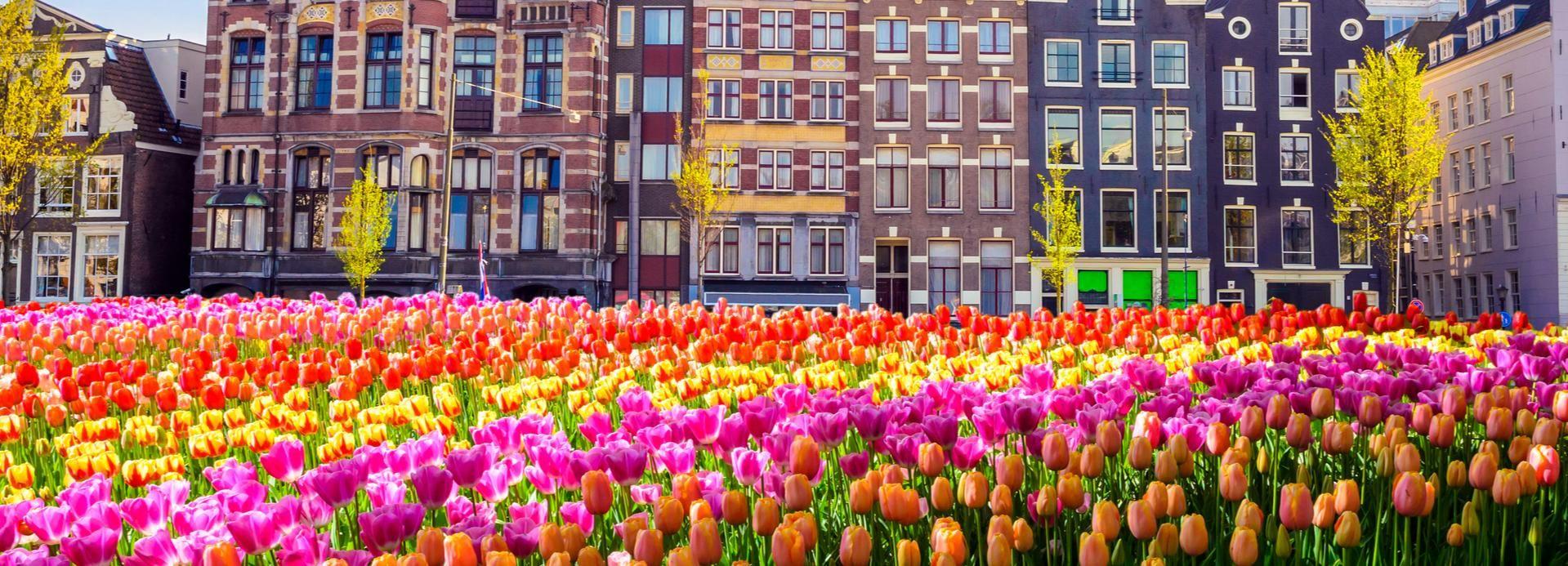 Amsterdã: excursão a pé guiada de 2 horas