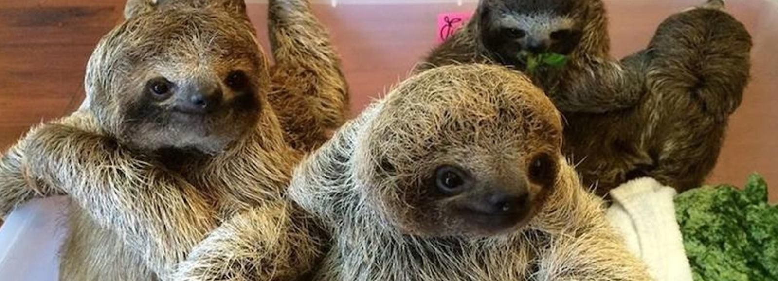 San Jose: Sloth Sanctuary and Wildlife Rescue Center Tour
