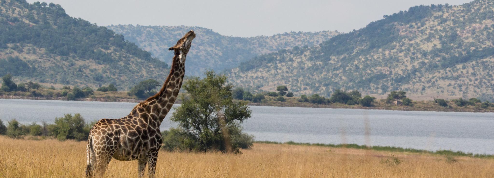 Pilanesberg: Open and Closed Vehicle Safari in Portuguese