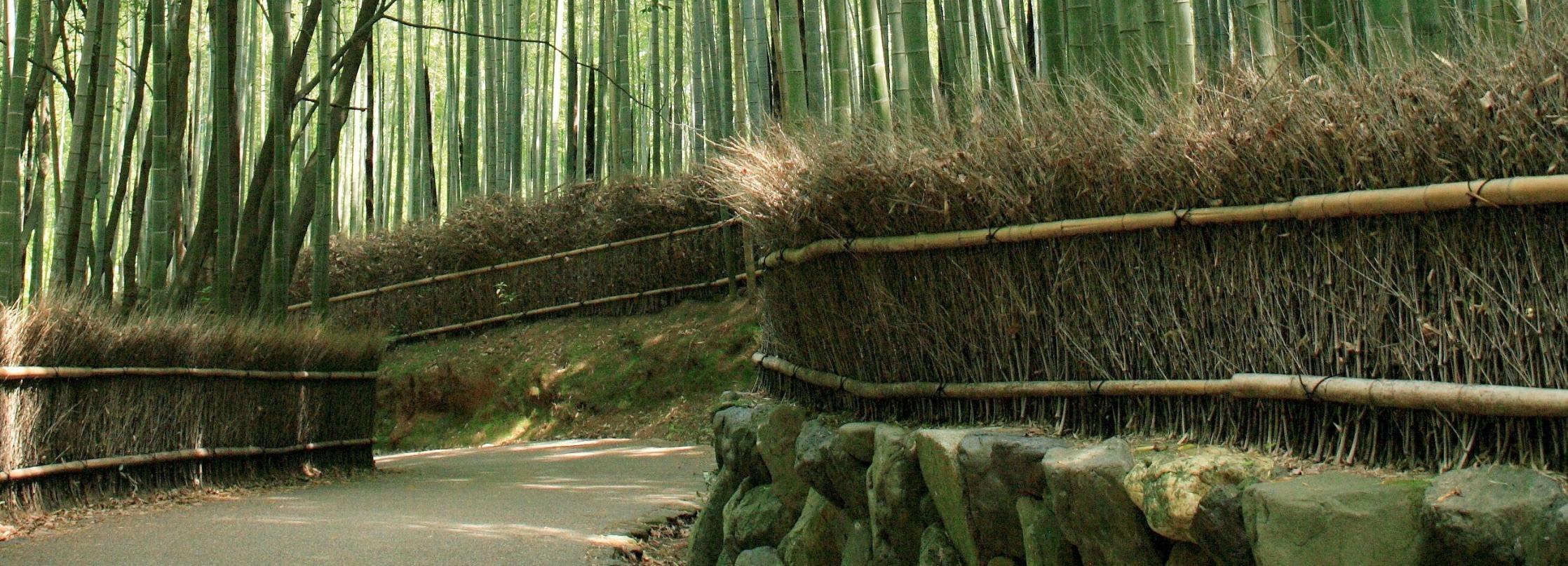 Kyoto: Arashiyama Guided Morning Walking Tour