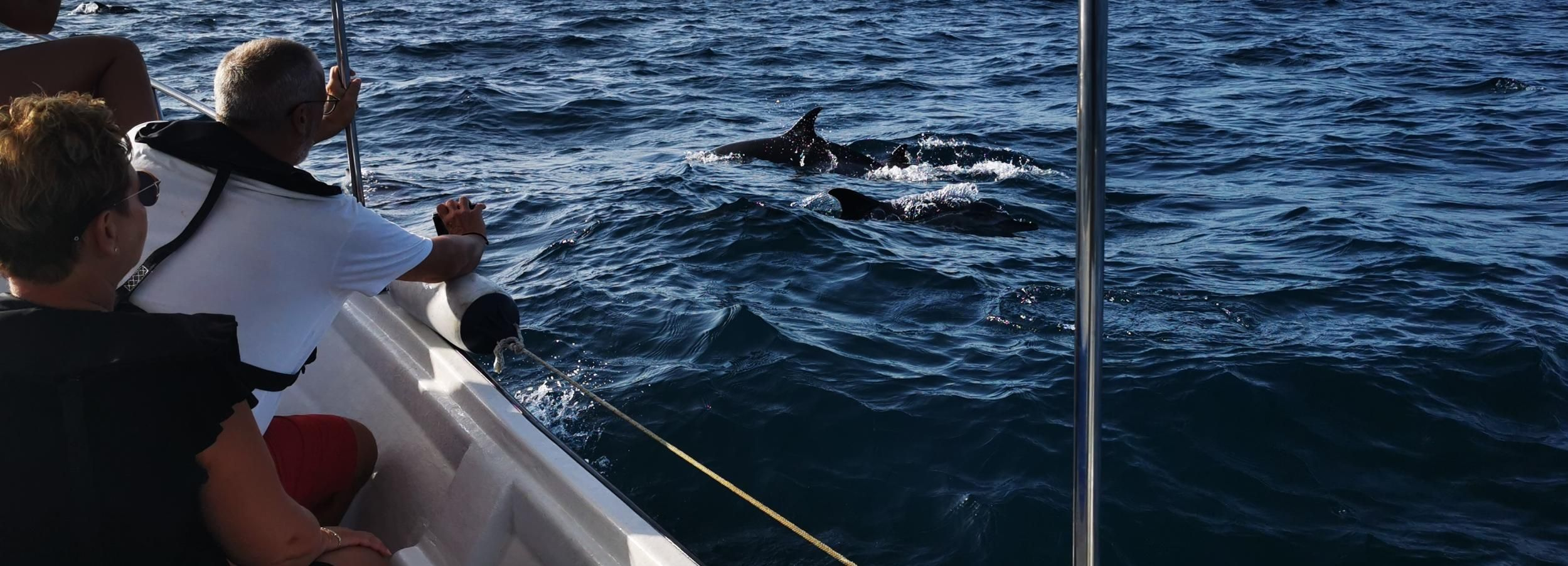 From Olhão: Dolphins and Sea Life Observation Tour
