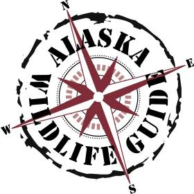 Alaska Wildlife Guide LLC