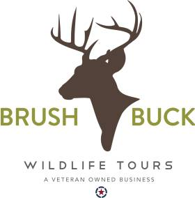 BrushBuck Wildlife Tours