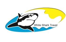 White Shark Egypt