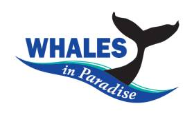 Sea World Cruises, Whales in Paradise