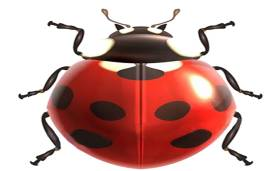 Beijing Ladybird International Travel