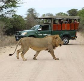 Viva Safaris