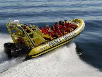 Ab Victoria: 3-stündige Whale-Watching-Tour im Zodiac-Boot