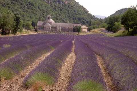 Provenza: tour tra i campi di lavanda da Avignone (1 giorno)