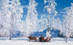 Romantic Sleigh Ride through the Salzburg Countryside