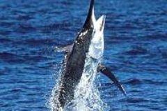 Pesca em alto mar Esporte em Acapulco