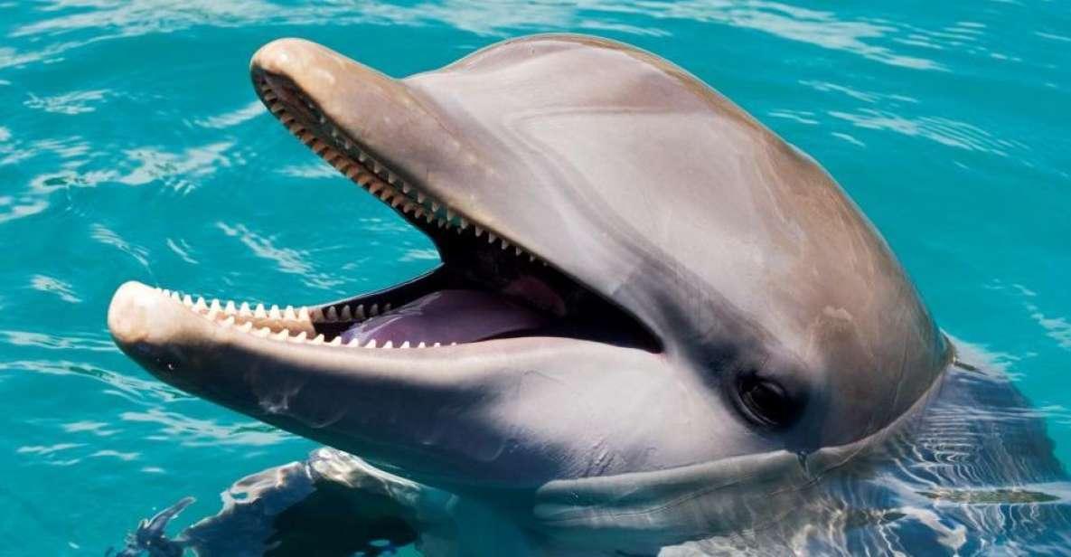 Puerto Plata: Ocean World Adventure Park Day Pass