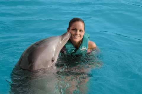 Ocean World Dolphin Swim & Sea Lion Combo from Puerto Plata