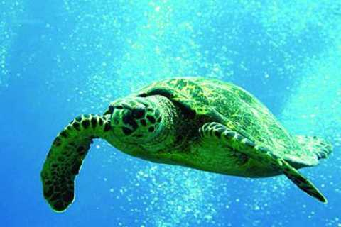 Oahu: 3-Hour Waikiki Snorkel & Sailing Adventure with Lunch