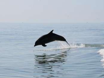 Ab Orlando: Delfintour in Clearwater Beach