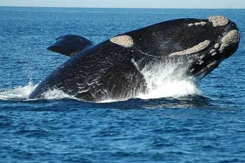 Whale Watching from Peninsula Valdes Full-Day Nature Tour