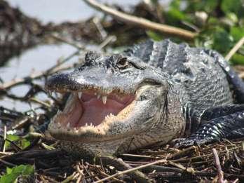 Ab Sanibel: Everglades, Fort Myers & Naples Tagessafari