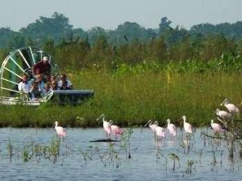 Captain Bob's Everglades Adventure