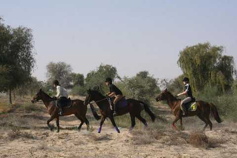 1 or 1.5 Hour Horseback Dubai Desert Park Ride