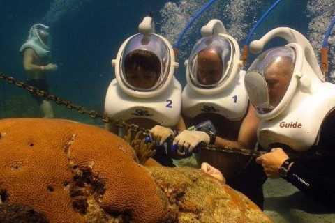 Sea Trek and Coral World Ocean Park General Admission