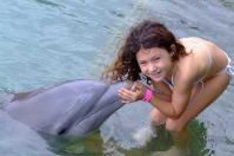 Touch Encounter with the Dolphins at Dolphin Cove Negril
