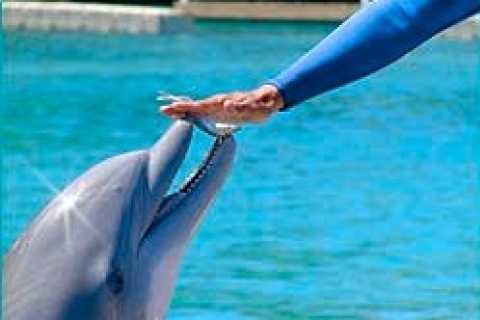 Ocho Rios: Half Day Dolphin Training