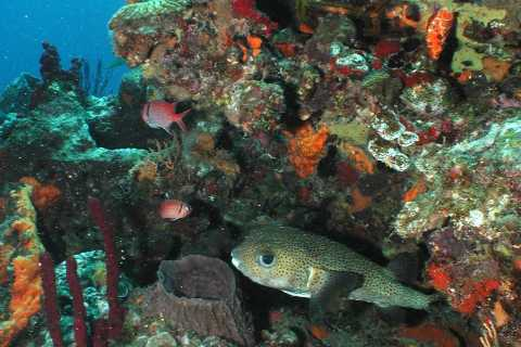 From Castries: 5-Hour St. Lucia Scuba Diving Excursion