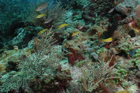 St. Lucia - Discover Scuba Diving for Non-Certified Divers
