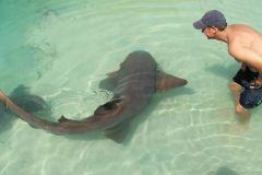 Nade com os incríveis tubarões de Dolphin Cove, Ocho Rios