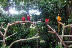 Ingresso matinal para o zoológico de Cingapura com traslado do hotel