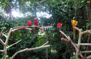 Singapore Zoo: Ticket am Morgen mit Hotelabholung