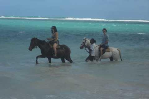 Guided Beach Horseback Riding, Dunn's River Falls & Park