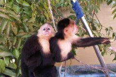 Excursão a Monkey Island e Aldeia Indígena