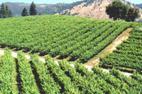 Wine and Harvest Tour to Gold country from Lake Tahoe
