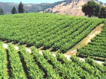 Kalifornien - Weintour El Dorado