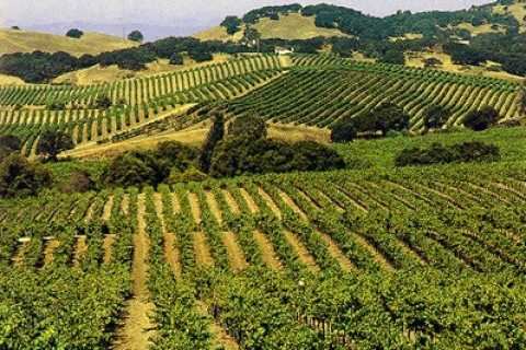 Sonoma Valley Half-Day Wine Country Tour