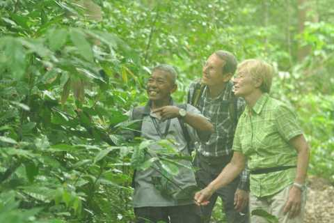 Langkawi Rainforest Day-Tour: Malaysian Jungle Trekking