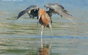Everglades: Birding, Wildlife, and Photography Expedition