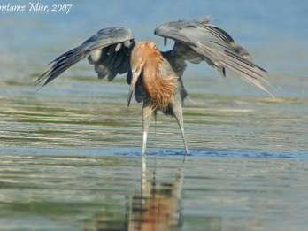 Everglades: Vogelbeobachtung, Wildtiere und Foto-Expedition