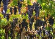 Amarone Weintour und Probe ab Venedig, Padua oder Verona