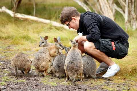 2-Day Phillip Island & Wilson Wildlife Tour from Melbourne
