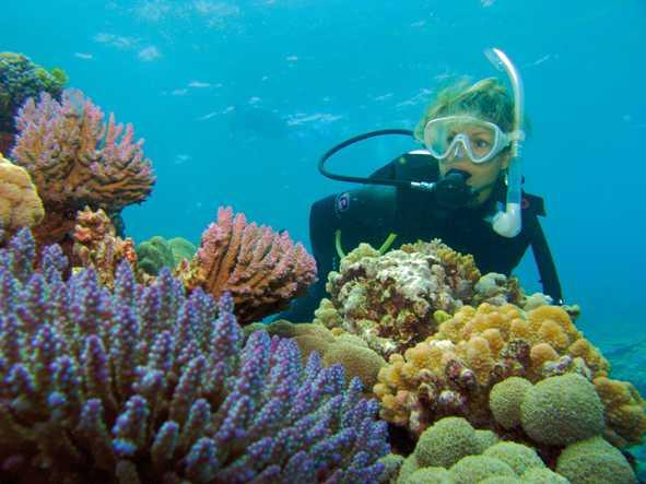 Buceo en la Gran Barrera de Coral Silversonic y Snorkel - Port Douglas,  Australia | GetYourGuide