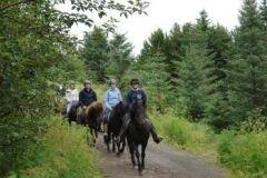Passeio do cavalo iniciante até Hafnarfjordur Campo