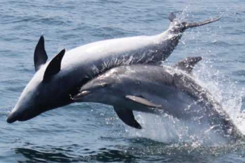 Gibraltar: 1-Hour Dolphin Watching Cruise