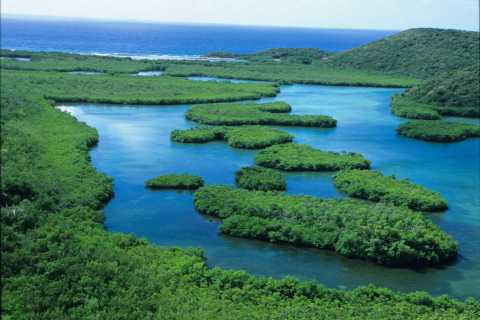 St. Thomas Mangrove Kayak, Hike, & Snorkel 3-Hour Tour
