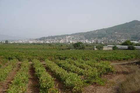 From Athens: 4-Hour Wine Tasting Tour