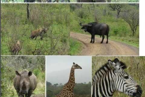 3-daagse Hluhluwe Umfolozi Game Reserve & St. Lucia Safari